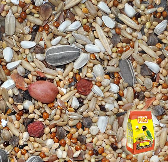Семена конопли для попугайчиков как правильно вырастить коноплю в горшке